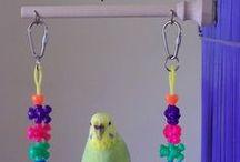 andy birds