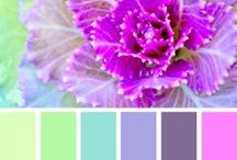 Color Palettes / Because colors don't match, but they do go together. If the colors complement each other, then you'll be the one getting compliments!