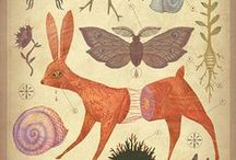 Vintage Nature Illustrations