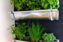Herb Garden / If you love to cook, then a herb garden is a must: there's nothing better than to have some freshly cut herbs on your cuisine to nourish your family! You can pick an outdoor or an indoor version, whatever works best for your space!