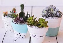 Cactus in Decor / Did you know cactus are super easy to look after? Adding some planters to the house in 3, 2, 1...