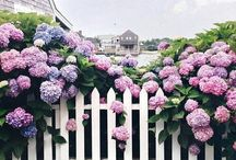 garden gates + fence posts