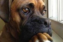Perros / Dog