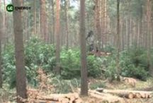 LC Energy Videos / LC Energy share some video files of Biomass operations including woodland management, planting and management of trees and the production and use of wood chip and wood pellets to create heat and power.