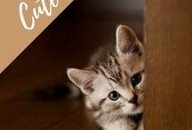 too cuuute / Cutest pet photography, funny baby animals - puppies, kittens and the sweetest animals ever.