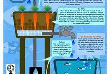 aquaponics/hydroponics