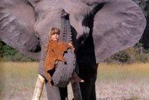 L'enfant et l'animal