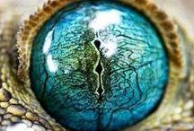 Animal's eyes
