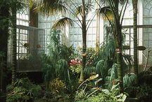 Växtlighet och grönt   Botanical / Flowers and plants. Green or colorful.