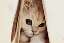 Kittens / The antidote for a bad day. Cuteness (Some pins are just for their images.)