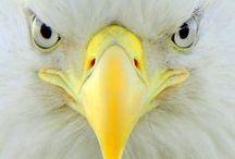 Birds : rapaces diurnes