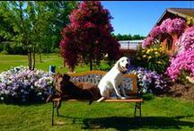 """Flowers & Dogs / We love our flowers, we love our puppies. What could be better than seeing both? Our dogs hang around the greenhouses and """"help"""" out, greeting customers, etc."""