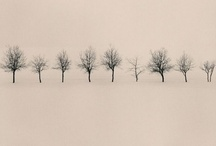 trees / by Thea Janetzki