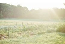Our farm / Our flower farm in Essex, Massachusetts, photographed by Purely Chic Photography.