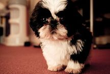 Bella beans / Inspirations for my puppy / by Karina Cruz