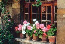 Plants, Bulbs, And Greenhouse's
