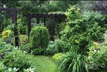 Ideas for my garden. / Some ideas to decorate my garden