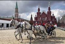 Orlov Trotter (Орловский рысак) / орловский рысак - гордость российского коневодства