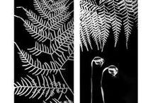 SUSAN PURDY PHOTOGRAMS - UNDERSTORY / An exhibition of hand printed photograms