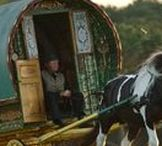 Tinker / Gypsy vanner horses