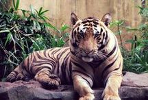 Zootrotters  / Pictures of Zoos around the world