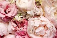 blumen ~ flowers ~ fleurs ~ fiori