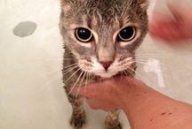 -Chaton- / À la découverte d'un chat d'intérieur ^^