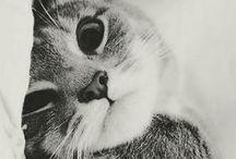 kittiesssss♡