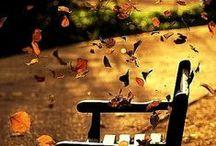 Autumn ☂