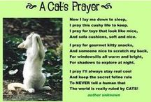 Pet Prayers, Memorials, Tributes / Prayers for all animals and memorials for those who have crossed the Rainbow Bridge / by Kookiekitty
