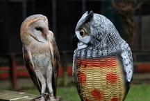 Owl / by Brenda Hammack