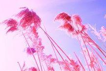 ● Pink ●