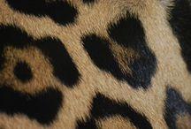 Leopard/Cheetah / by Helen