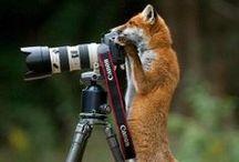 Funny/ cute/ beautiful animals