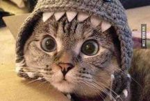 Cuteness Overload / The cutest animals around. These will make your day!
