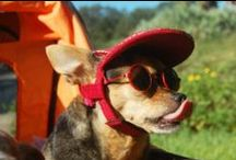 Orlando for Pets / Traveling with pets in Orlando, Florida