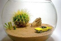 cactus jungle urban