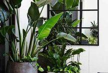 Auterior  / Garten