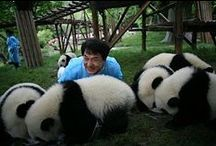 Jackie Chan with animals / Because why not? / by Tyler Phillippi