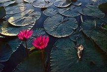 flower / renk