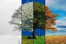 Seasons / There's nothing like a new season - whether it's the warmth of a hot sunny day, or the falling leaves on a cloudy autumn day, the change to a new season brings excitement and the feeling of a fresh start. So, why not celebrate it?  http://www.fulcrumgallery.com/c7643/seasonal-art.htm