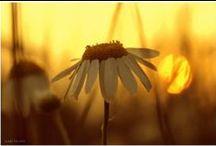 Sonnenaufgänge und Sonnenuntergänge / Landschaftfotografie bei Sonnenaufgang und Sonnneuntergang von madebyulli.de