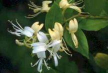 Fiori flowers blumen / by Silvana Lugano