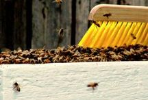 Homesteading | Bee Keeping