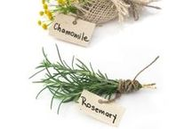 Homesteading | Herbs