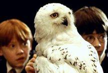 potterhead / Long live, Harry Potter