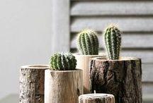Plantes et fleurs / Plantes sauvages, arbres, fleurs d'ici et d'ailleurs #plants #plant #flower #flowers #cactus #succulent #fleur #fleurs #plante #plantes #tree #trees #arbres