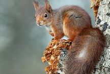 Wildlife / Wildlife / Animaux sauvages #wildlife #nature #animals #animals #animaux #faune #flore #planet #earth #terre