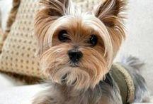 Chiens / Dogs / Petits chiens, grands chiens, chiens poilus, chiens tachetés, chiens trop mignons #chien #chiens #dog #dogs #doggy #doggies #pet #pets #animal #animals #chien #chiens #chiots