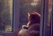 Chats / Cats / Petits chats, grands chats, chats trop mignons #cat #cats #pet #pets #animal #animals #friend #chat #chaton #kitten #kitty